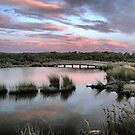 The Torquay Wetlands (6) by Larry Lingard/Davis