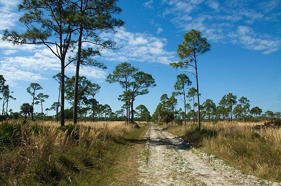 Flatwood Preserve Pine Island FL by John  Kapusta