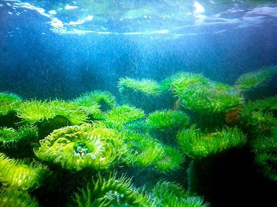 New England Aquarium by shoshgoodman