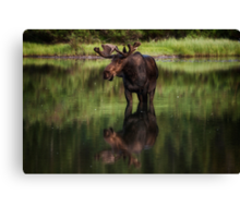 Reflecting Bull - Many Glacier Canvas Print