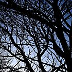 Evening tree branches by Roxy J