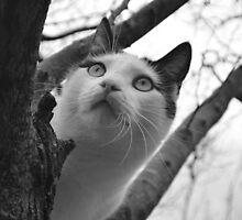 Eyeing Something by rosaliemcm
