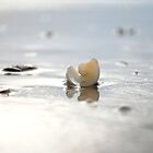 Seashell by the Seashore by Kae'tî Stolarski