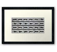 Cat running, plate 720 from 'Animal Locomotion', 1887 Framed Print