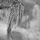 Icicles by Tim Haynes