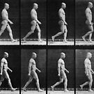 Man walking, from &#x27;Animal Locomotion&#x27;, 1887 by Bridgeman Art Library