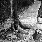 Tree Path by MrWolfe78