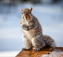 Posing for Peanuts by Mikell Herrick