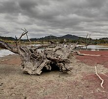 Drying Out,  Tin Hut Rural NSW by Kym Bradley