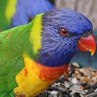 Rainbow Lorikeet by Anne-Marie Ladegaard