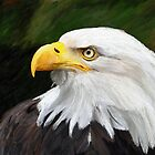 Bald Headed Eagle by James Shepherd
