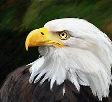 Bald Headed Eagle by artbyjames