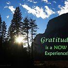 Gratitude Is Now by Wendy Meg Siegel