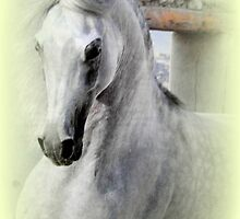 Arabian Horse featured in Just the Horse & Equine Art & Photography by ©The Creative  Minds