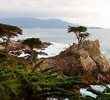 Lone Cypress Large by BarbaraSnyder