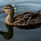 Duck on Water by 5u623r0