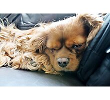 Dawg Tired Photographic Print