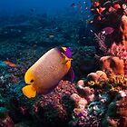 Angel Reef by ZeamonkeyImages