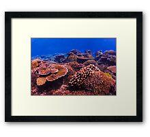 The Living Reef Framed Print