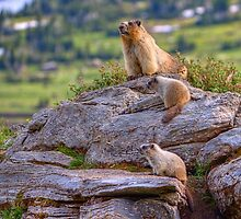 Family of Marmots by JamesA1