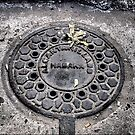Manhole Cover, Havana by ponycargirl