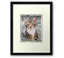 Can I come in? Framed Print