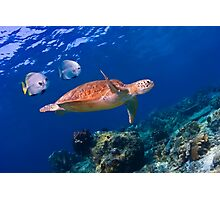 Sea Turtle and Entourage Photographic Print