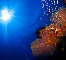 Sun over The Reef by ZeamonkeyImages