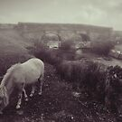 Foggy day in Dartmoor by audah