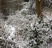 Snow In the Undergrowth by Sophie Gorner