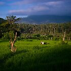 Balinese Rice Fields by ZeamonkeyImages