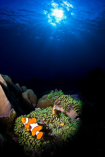 Clownfish Solitude by ZeamonkeyImages