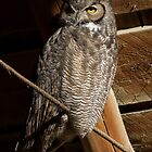 Great Horned Owl: First Light in the Hay Loft by John Williams
