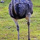 Running Emu by Darrick Kuykendall