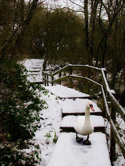 A Snowy Walk by Carol Bleasdale