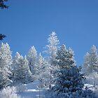 Freshly Fallen Snow On Trees by CADavis