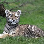 tiger cub 2 by Martynb