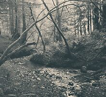 Through the Woods by Laurie Search