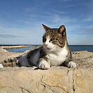 Tabby cat on Sea wall, Denia, Spain by LisaRoberts