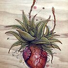  Aloe Glauca Heart by Fay Helfer
