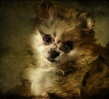 Rosie the Puppy by Susan  Kimball