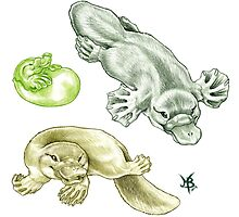 3 Little Platys by Mayra Boyle