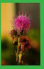 thistle flower iphone by dedmanshootn