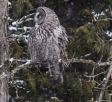 Owl Incognito 6 by Ginny Fobert