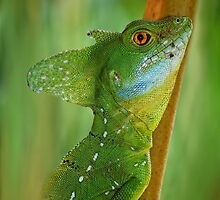 Emerald Basilisk by jimmy hoffman