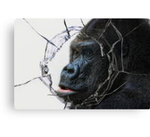 looking for freedom Canvas Print