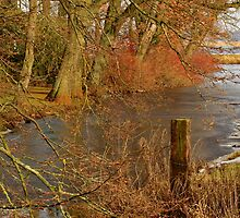 Colourfull nature in the mid of our winter, Germany. by Birgit Van den Broeck