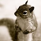 One Handsome Squirrel by ACBPhotos