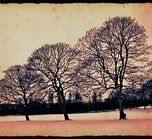 Snow trees by Nadeesha Jayamanne