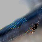 spider in the sun by bundug